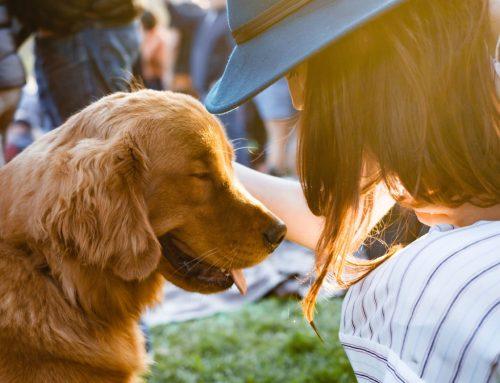 Cómo influyen los animales en tu estado de ánimo.