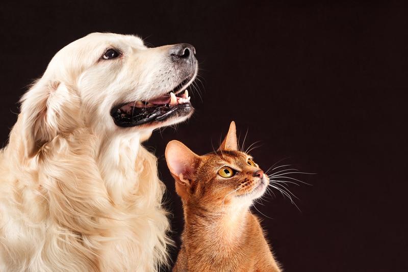 Los animales de compañía: la llamada de su ser interior para sanar y poner orden su ser